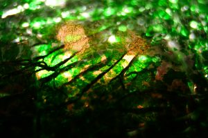 Green Cracked Glass Texture stock background wallpaper broken image shattered