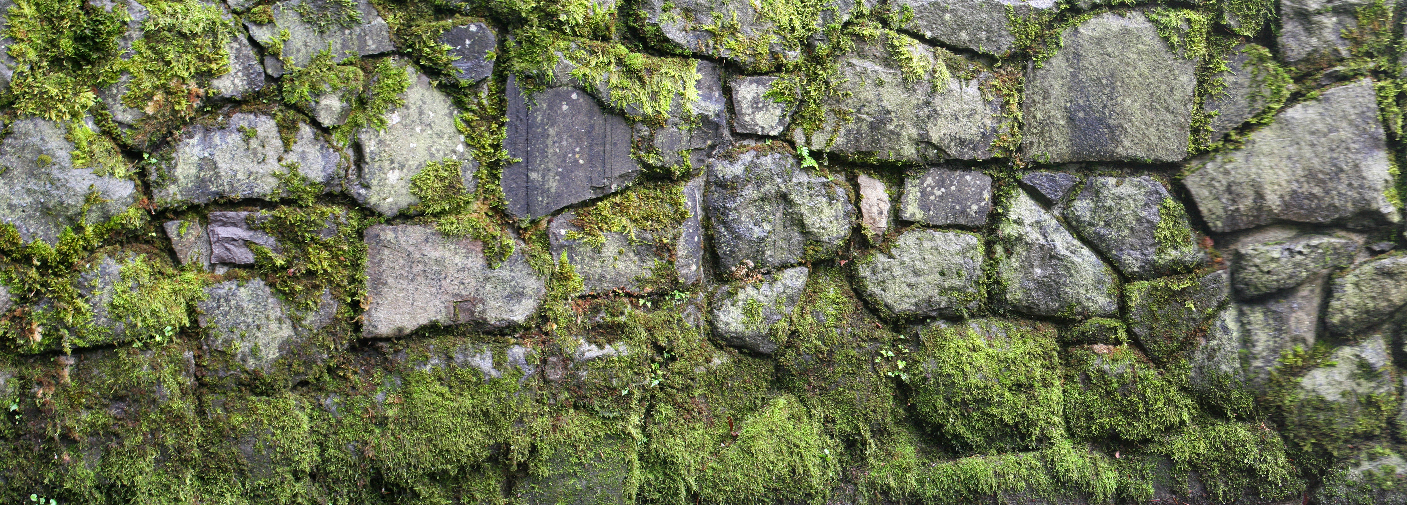 Paint Walls With Moss