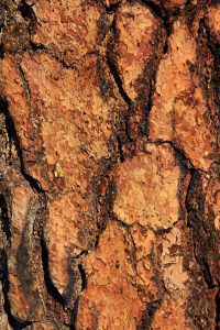 Wood Texture red wood bark large section macro detail close up crust photo