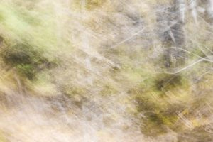 blur texture fuzzy forest movement trees long exposure photo