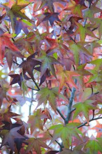 fall leaf texture stock red color green photo tree autumn leaves