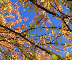 nature texture fall tree branch Green Colors Leaf Orange Autumn