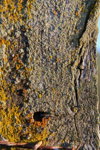 textureX lichen moss algea wood wodden post overgrown color life city Texture