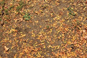 ground outside dirt with orange leaves