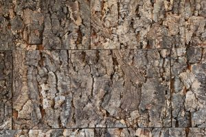 wood texture tree trunck zoom in composite age
