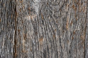 wood texture trunk of tree Canada